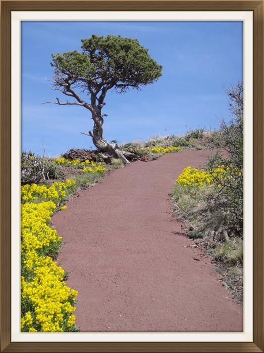Colourful Path to the Top of Capulin Volcano, New Mexico